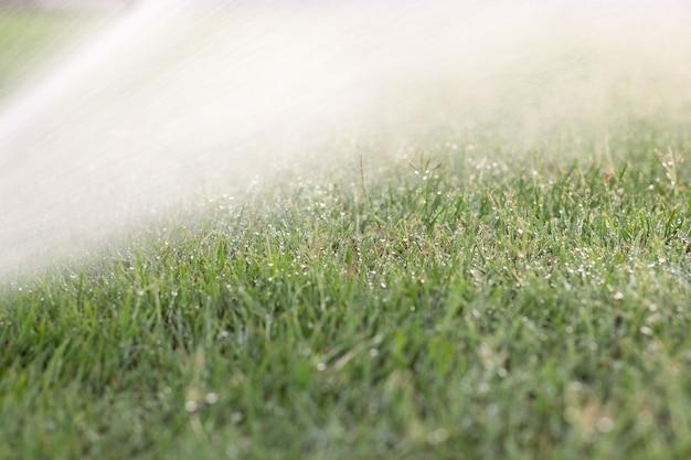Campo ensolarado de grama verde com gotas de chuva