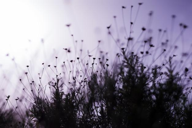 Campo flor, durante, pôr do sol