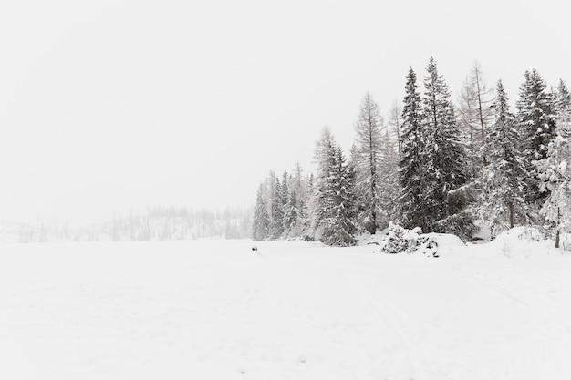 Campo gelado e madeiras