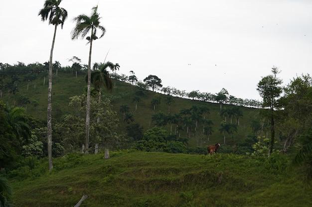 Campo gramado com dois cavalos de distância com uma colina gramada na república dominicana