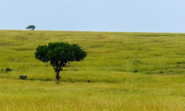 Campo gramado com uma árvore e um céu azul ao fundo