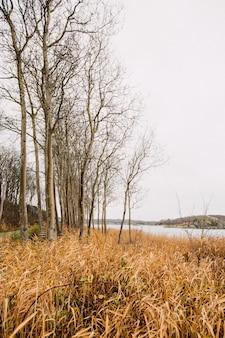 Campo gramado seco com árvores sem folhas, perto de um lago sob um céu nublado