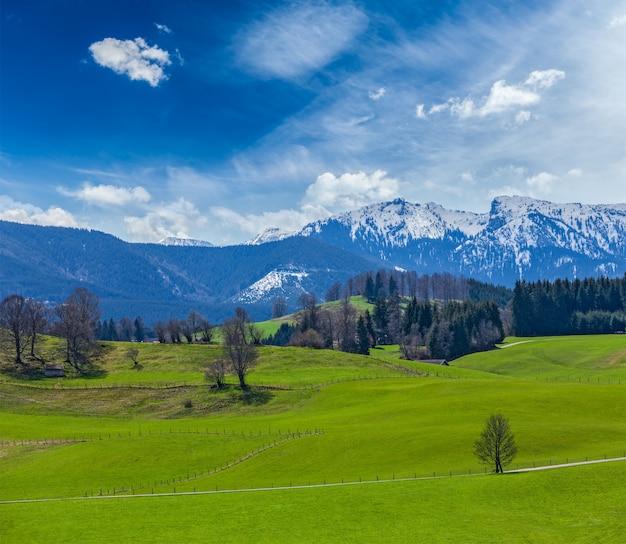 Campo pastoral idílico alemão na primavera com alpes em backg