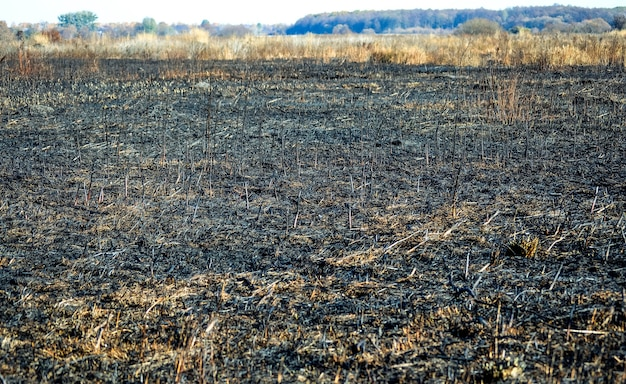 Campo queimado de grama seca, dia, filtro