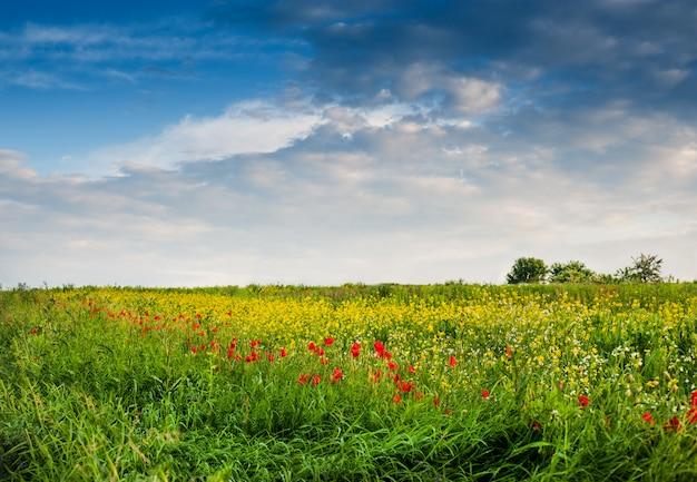 Campo selvagem de flores e lindo céu