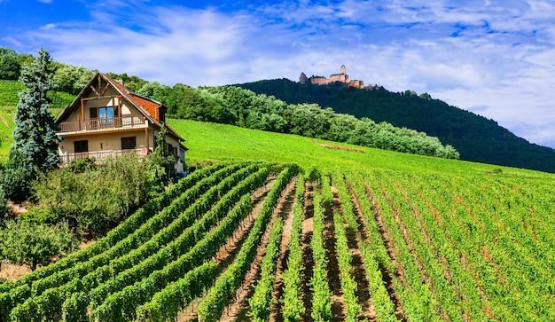 Campo tradicional na alsácia com vinhas e castelos. famosa rota do vinho na frança
