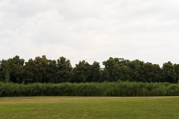 Campo verde com floresta de árvores jovens