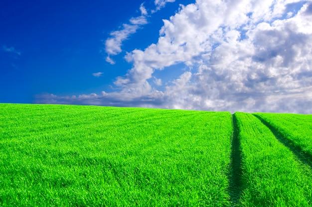 Campo verde com marcas de pneu e nuvens