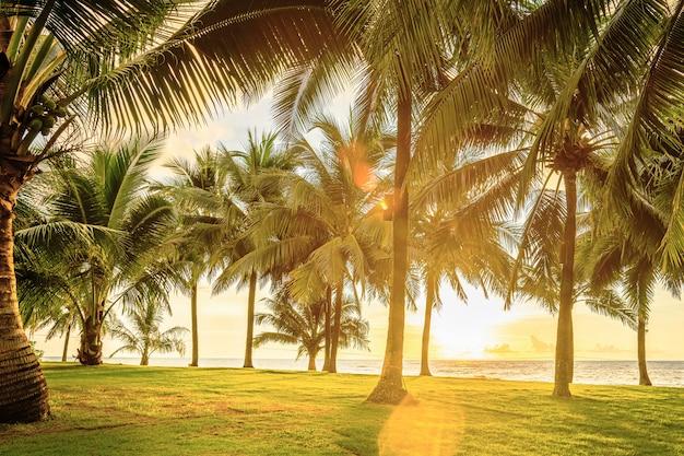 Campo verde com palmeiras à beira-mar