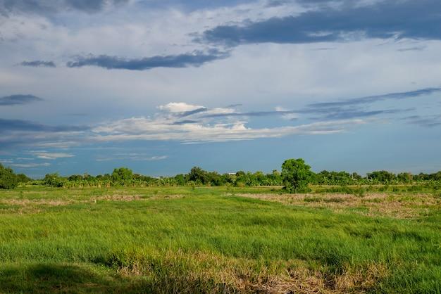 Campo verde da paisagem antes da tempestade da chuva em tailândia