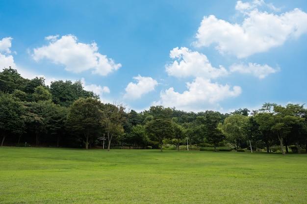 Campo verde e céu azul.