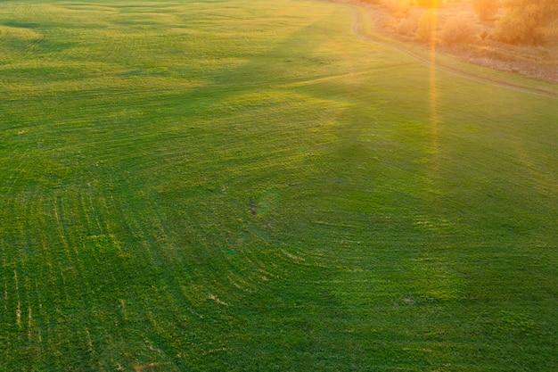 Campo verde e raios de sol, paisagem rural