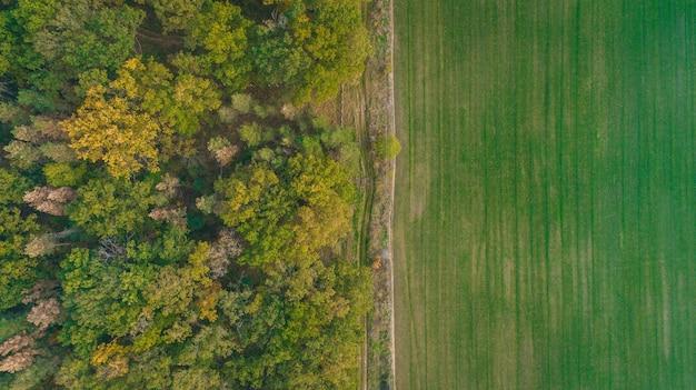 Campo verde e vista aérea da floresta de outono