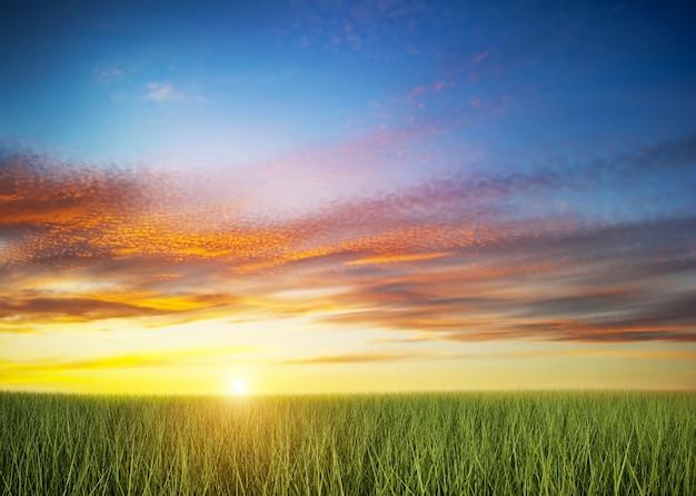 Campo verde no por do sol