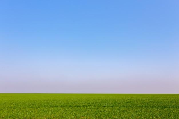 Campo verde primavera