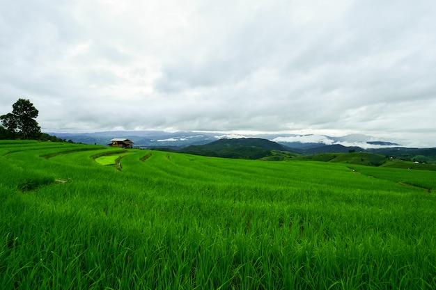 Campo verde rodeado pela natureza.