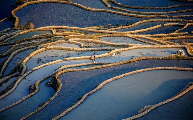 Camponês chinês caminha à beira de um campo de arroz. terraços de arroz da província de yunnan, china.