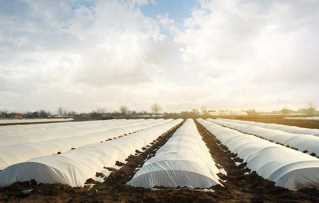 Campos agrícolas cobertos com uma camada protetora contra o frio ruim spunbond agrofibra