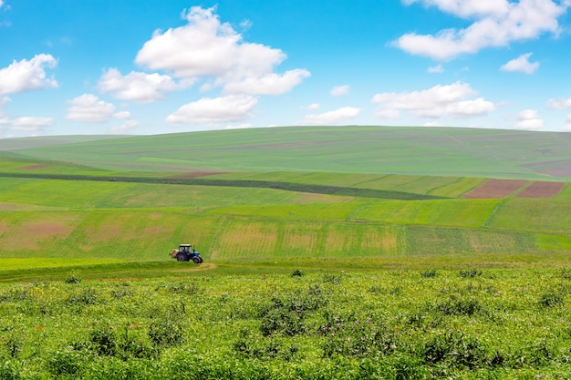 Campos agrícolas verdes cultivados com céu azul e nuvens