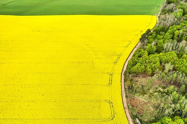 Campos amarelos e verdes brilhantes de um lado e uma floresta do outro