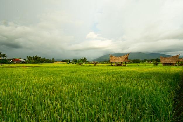 Campos com arrozais.