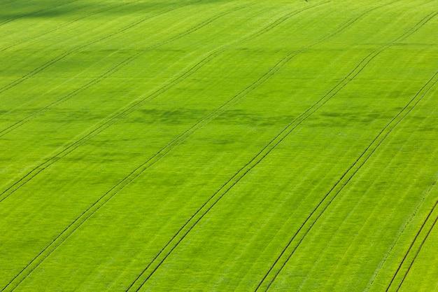 Campos com trigo e cevada de cima
