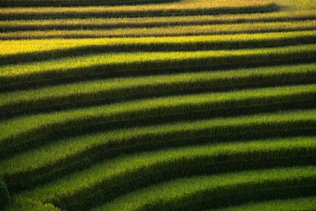Campos de arroz abstrato em terraços de mu cang chai vietnã