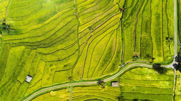 Campos de arroz bonitos em bali. famosa pelos campos de arroz em casca na ásia.