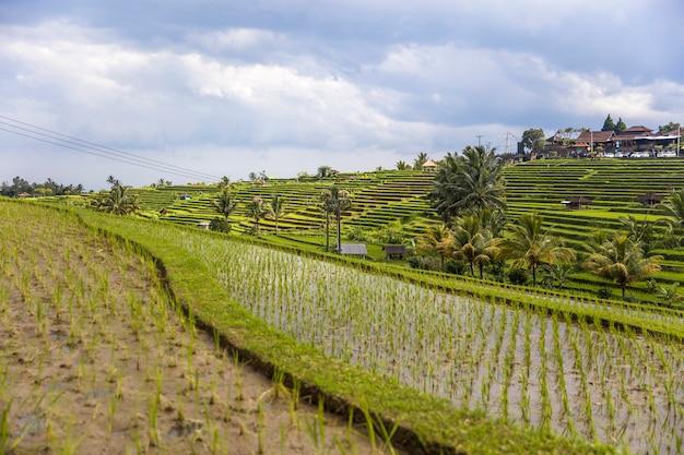 Campos de arroz de jatiluwih no sudeste de bali