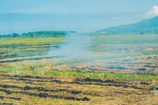Campos de arroz e montanhas