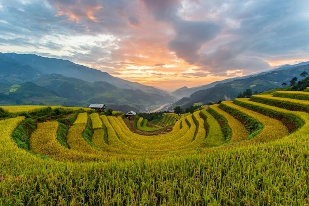 Campos de arroz em socalcos verdes em mu cang chai