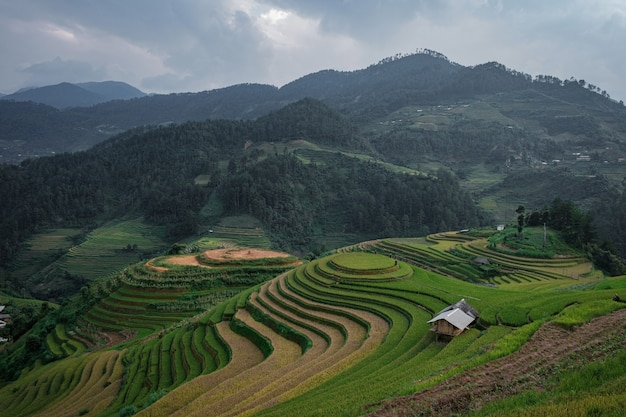 Campos de arroz em socalcos