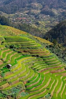 Campos de arroz no noroeste do Vietnã