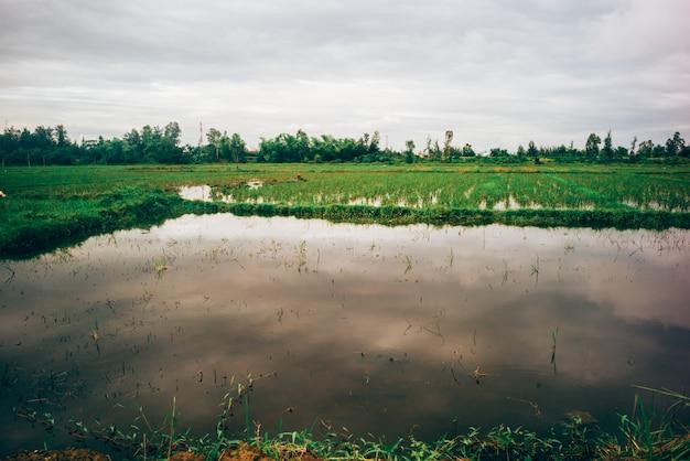 Campos de arroz no vietnã