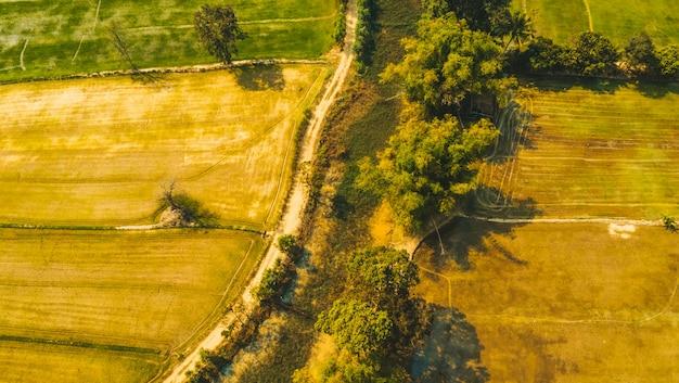 Campos de arroz paddy paisagem vista na zona rural
