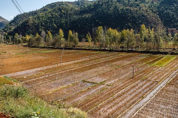 Campos de arroz vazio após a colheita, yunnan, china