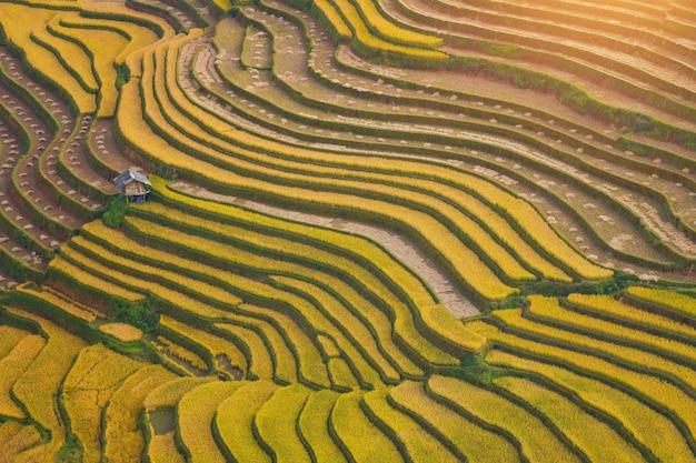 Campos de arroz verde em socalcos em mu cang chai, campo de arroz do vietnã