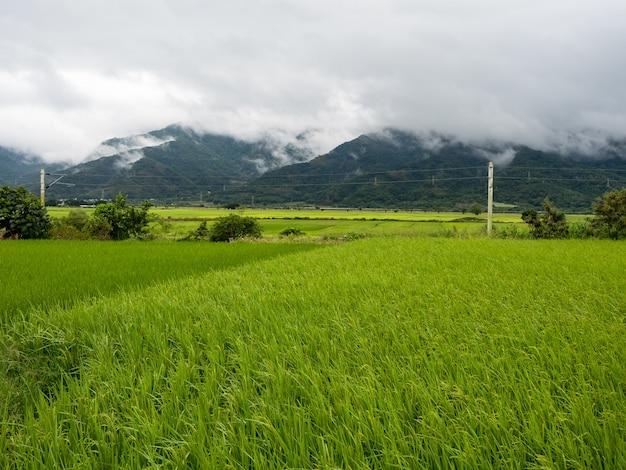 Campos de arroz verdes, nuvens brancas, montanhas em hualien, taiwan.