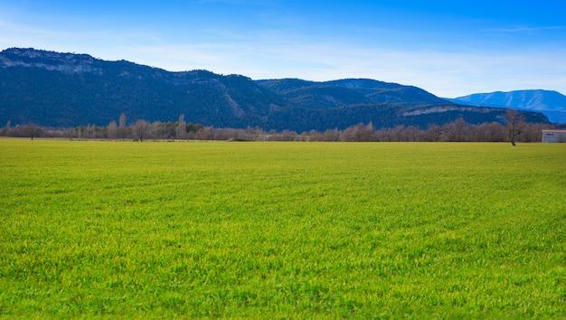 Campos de cereais brotos verdes como prados em espanha