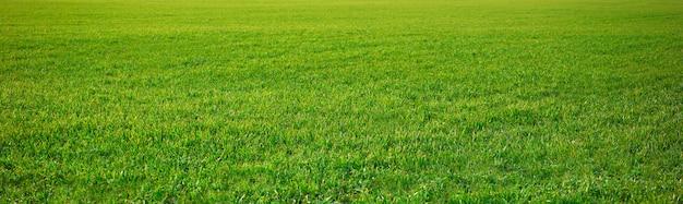 Campos de cereais brotos verdes como prados espanha