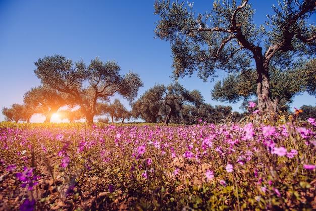 Campos de flores cor de rosa ao sol.
