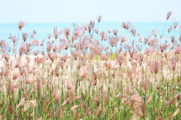 Campos de flores silvestres de bela grama desabrochando no verão com luz solar natural perto do mar azul