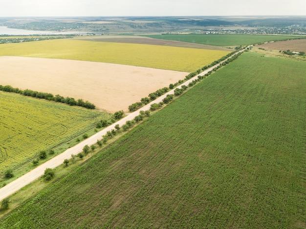 Campos de girassol e trigo com estrada em frente acima
