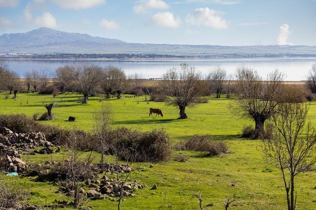 Campos de pastagem com vacas à beira de um lago com montanhas ao fundo