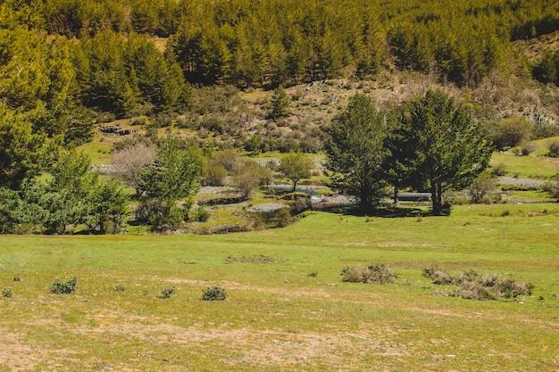 Campos gramados no campo