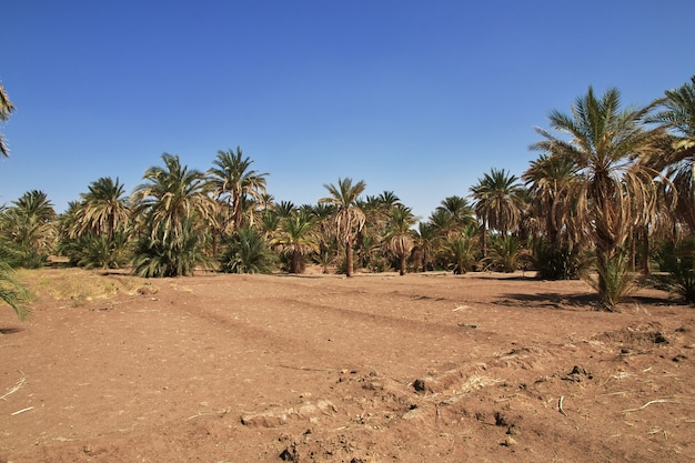 Campos na pequena vila no rio nilo, sudão