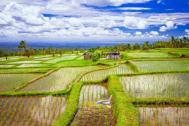 Campos pictóricos de arroz na ilha de bali
