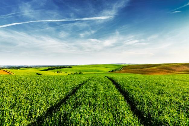 Campos verdes da morávia