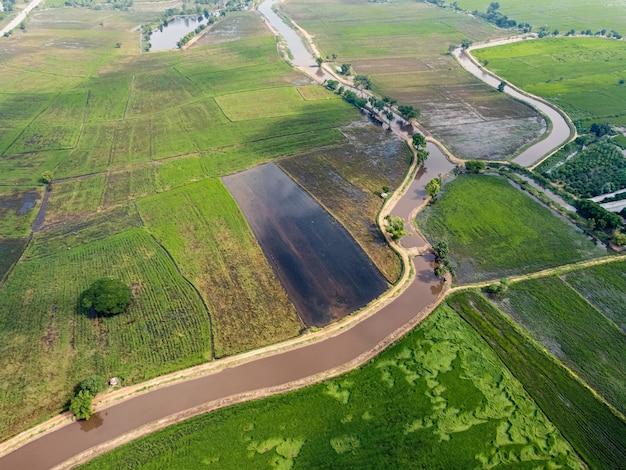 Campos verdes de arroz na ásia, fotografias aéreas de drones