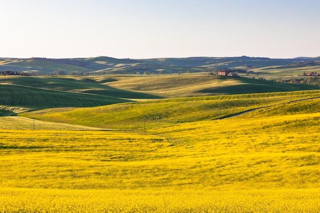 Campos verdes e amarelos da toscana val d orcia ao ar livre